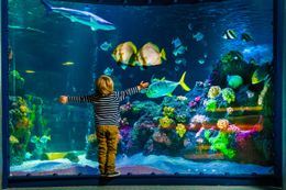 3 days in 4*S Park Hotel Oberhausen incl. 2 tickets for  for the SEA LIFE in Oberhausen & limousine ride